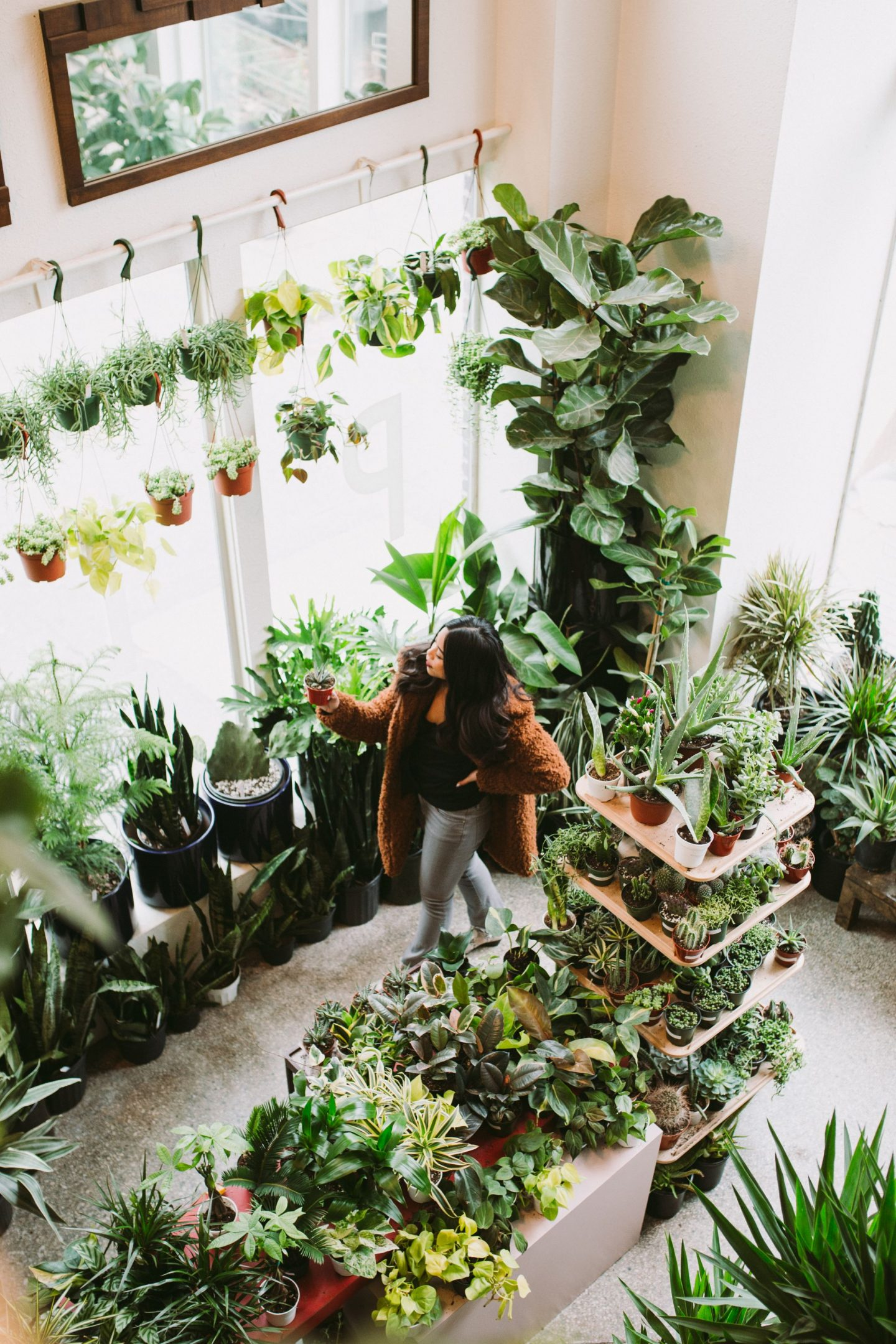 Plant Shop Seattle – Homestead Plant Shop Seattle – the plant shop seattle – plant shop central district – plant shops in seattle – where to buy plants in seattle – plant shop inspo – plant inspiration – plant décor – plants for apartments – plants for home