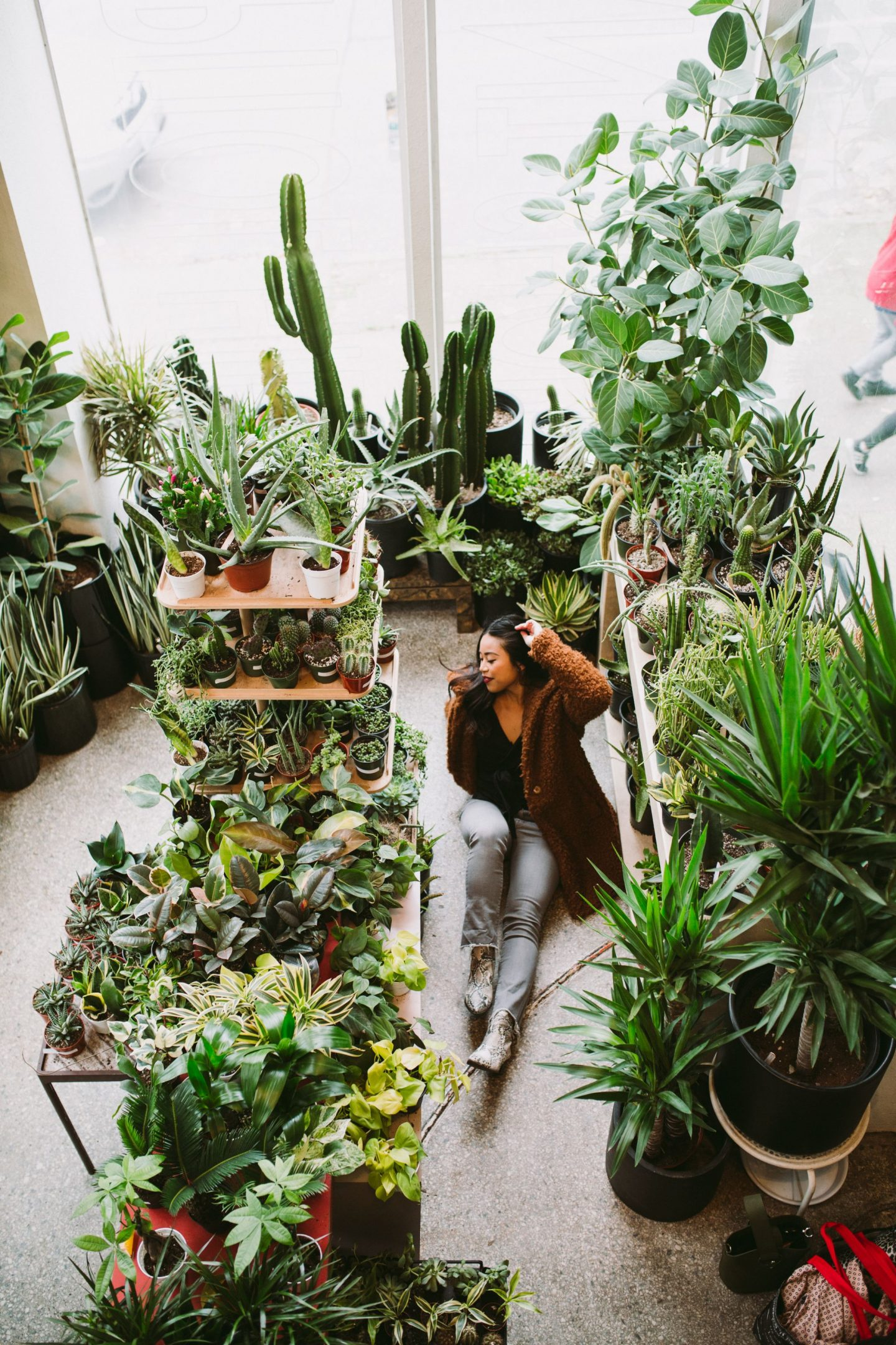 Plant Shop Seattle is a Plant Lovers Dream