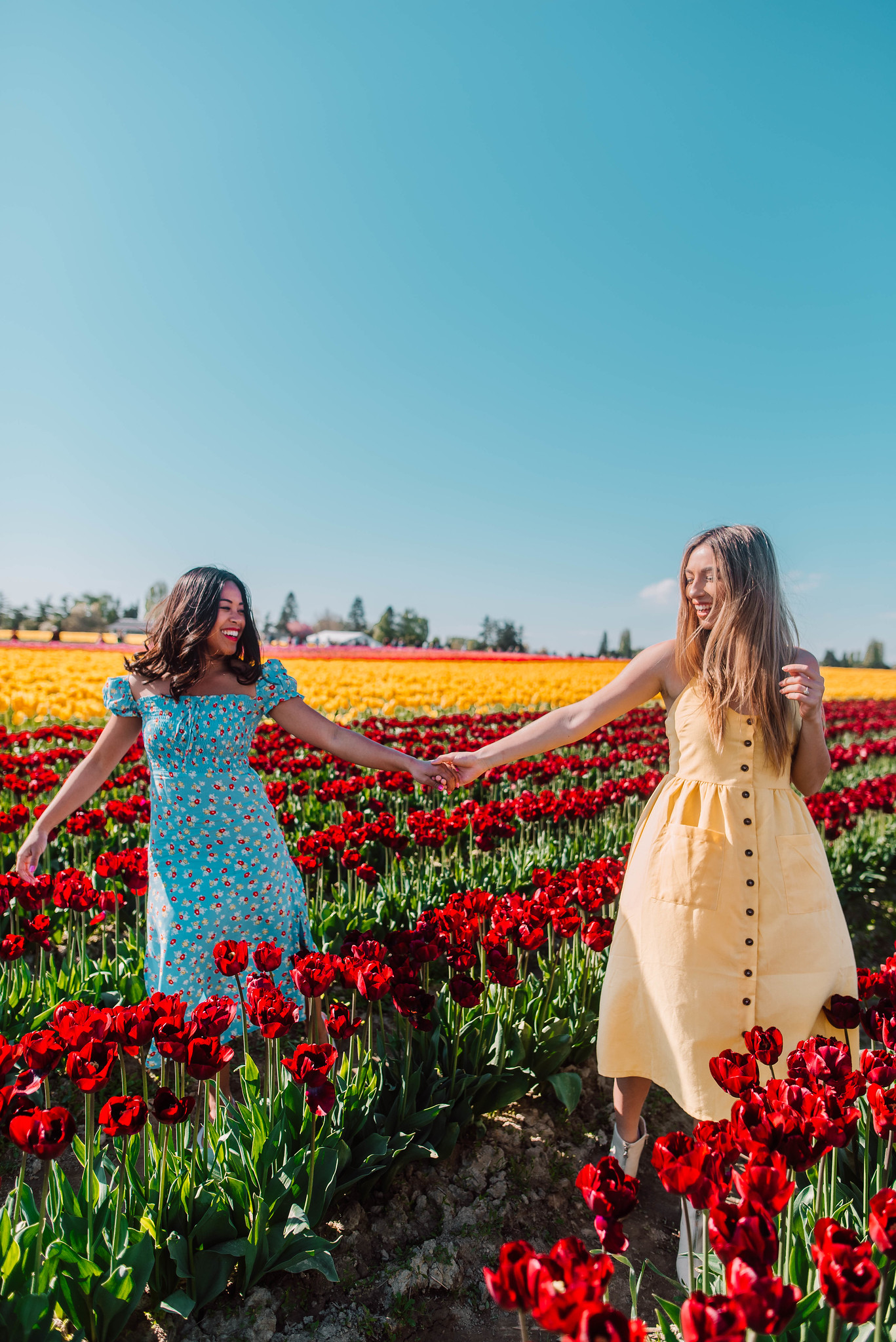 hold hands at the tulip field