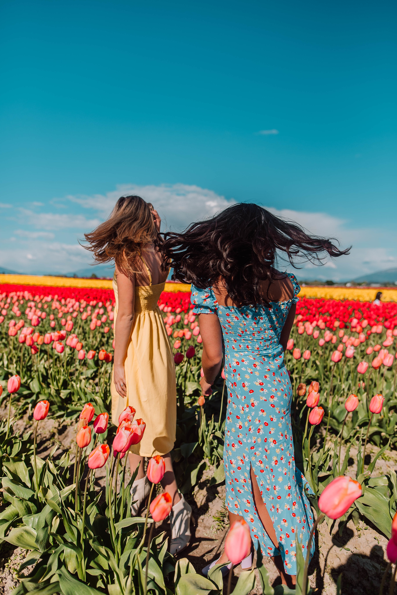 whip your hair back and forth - rows of tulips